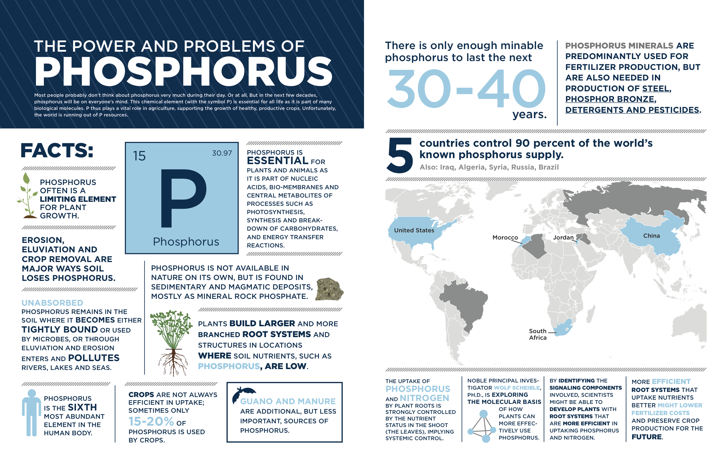 Phosphorus_infographic